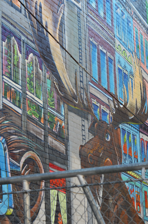 a large mural on a wall behind a fence, painted moose, large, seems to be looking over the fence.