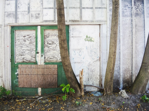 trunks of three trees growing in front of an old white building with a green door. windows in door are covered with plywod and a piece of plywood is nailed over parts of the lower half of the doors to keep them closed.