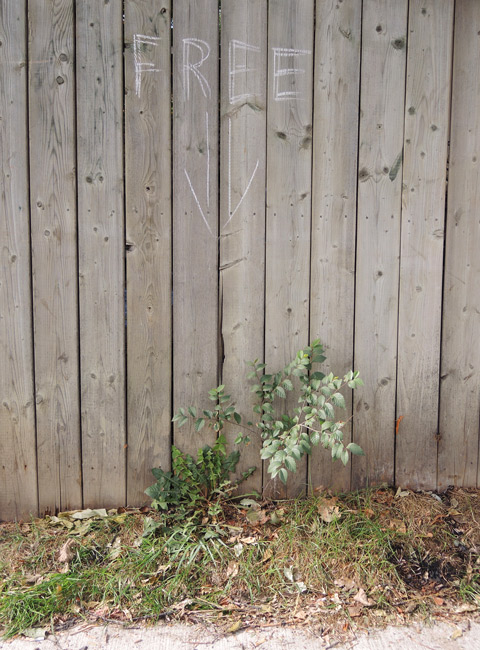 a wooden fence, someone has wrriten the word free in white, under it is an arrow that points downward to the sidewalk. There is nothing on the sidewalk. There is a large weed growing between the bottom of the fence and the sidewalk.
