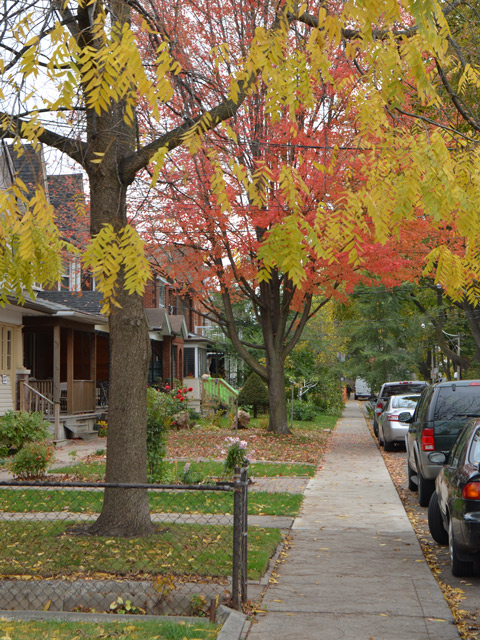 autumn street scene with locust tree with yellow leaves, sidewalk, some dead leaves on the ground, grass still green, orange leaves on the tree in the background
