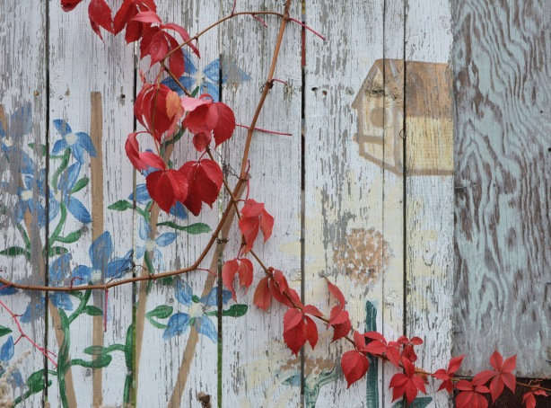 red leaves on a vine growing in front of a white fence that had a mural of birdhouse and plants and flowers painted on it.