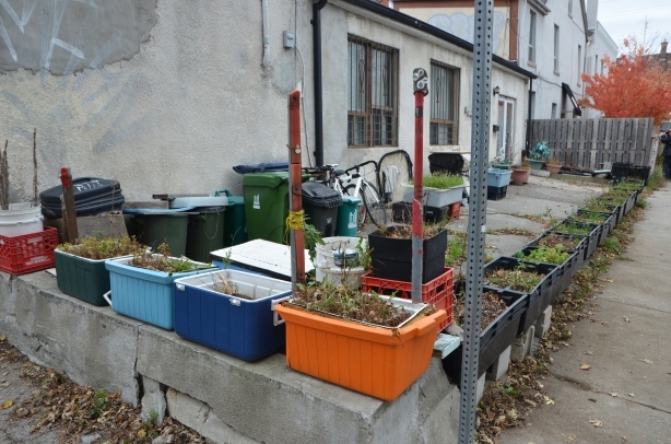 patio outside a house is covered with plastics bins of different kinds, all of which have been turned into planters, autumn now so plants no longer alive but boxes and coolers and bins remain.