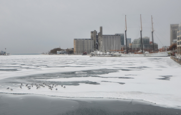 ducks onthe ice on Lake Ontario in the foreground, Canada Malting Co silos in the backgrounds