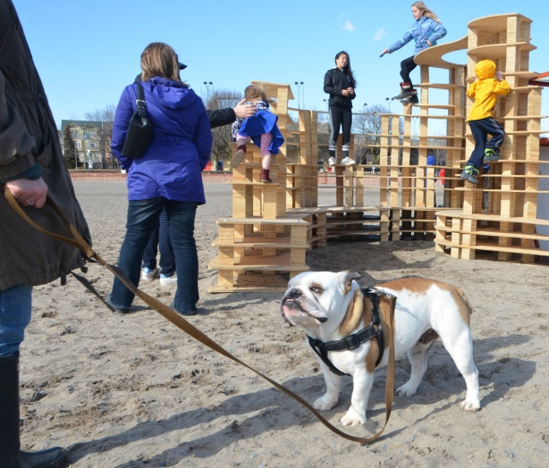 a white and brown dog on a leash in the foreground, people and kids climbing on a wooden structure which is actually an art installation called Rising Up