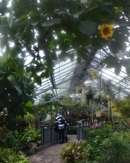 inside shot at Allan Gardens conservatory, with two people looking at the plants, glass roof, large yellow flowers