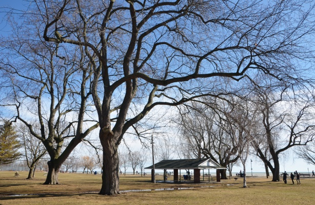 large park beside Lake Ontario at Kew Beach, Toronto, large mature leafless trees, spring, grass is brownish colour, some people in the distance, walking on the boardwalk,