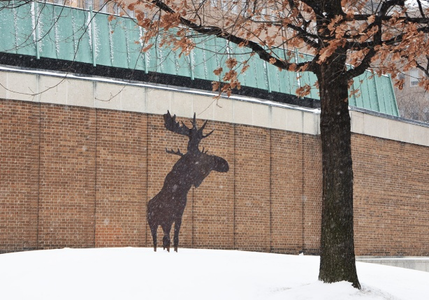 a flat metal sculpture of a moose stands in a small space beside a tree, snow on the ground, snow falling from the sky. public art
