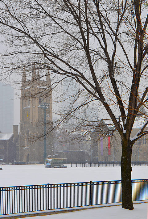 snow is falling, snow on the ground, tree in foreground, also black wrought iron fence, looking across the playing field of the U of T St. George campus to a building, tower,