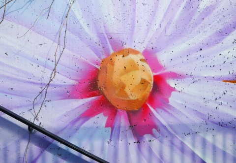 part of a mural, large light purple flower with yellow center and dark pink at inner most part of petals
