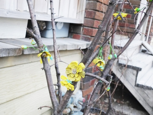 small leafless shrub in the front yard of a house, small yellow fake flowers strung through the branches, the flowers are old and dirty.