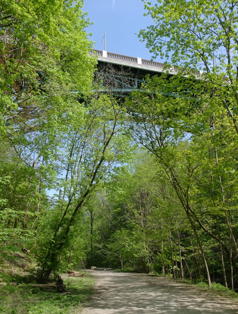 path through the woods in a Toronto ravine, green trees, above is a bridge