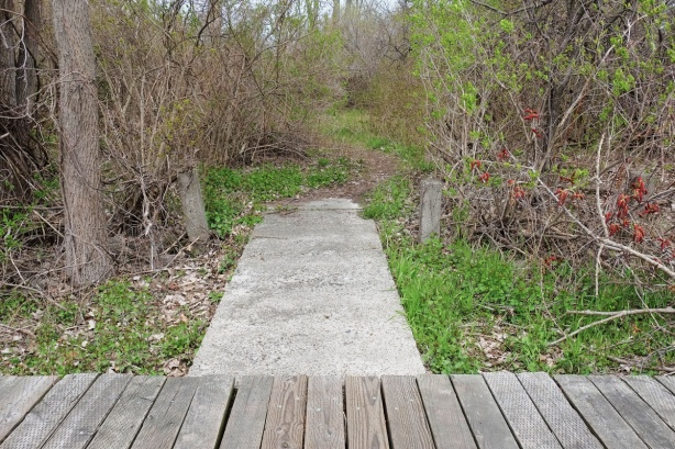 wood boardwalk along the foreground of the photo with a concrete path leading away from it, into an overgrown area