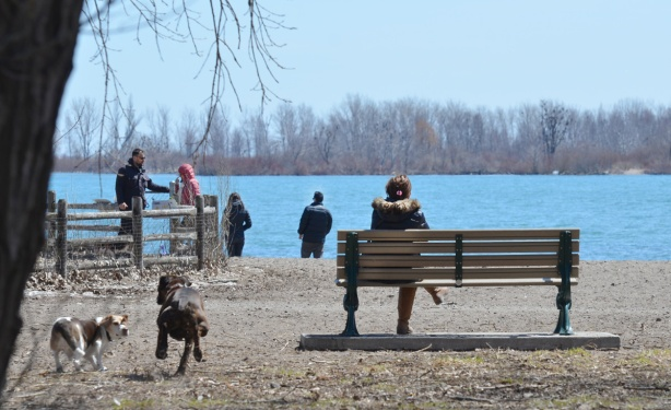 woman sitting on a bench under large trees by a beach, two dogs running towards the beach, some people standing by Lake Ontario