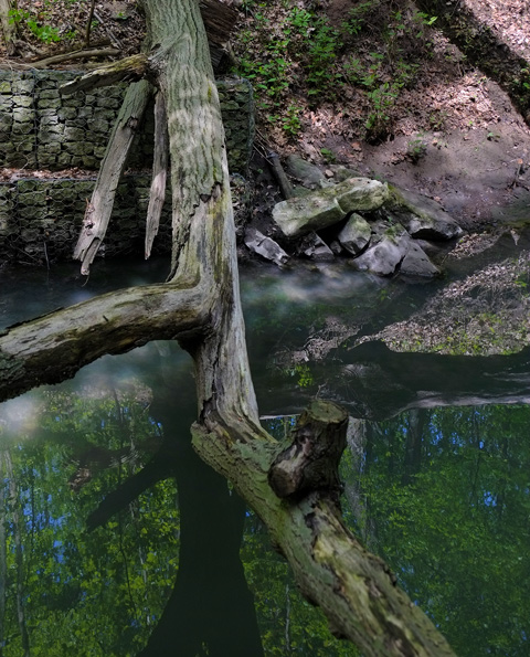 an old tree has fallen across a creek, small amount of water in the creek