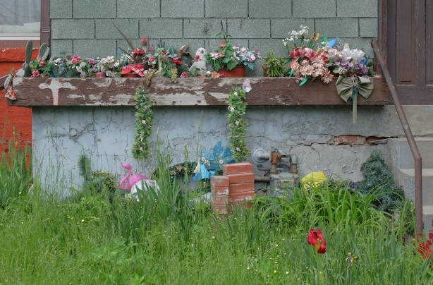 an overgrown front yard with very tall grass and one red tulip. Front of house has a brown window box, paint peeling, with plastic flowers and other stufff in i
