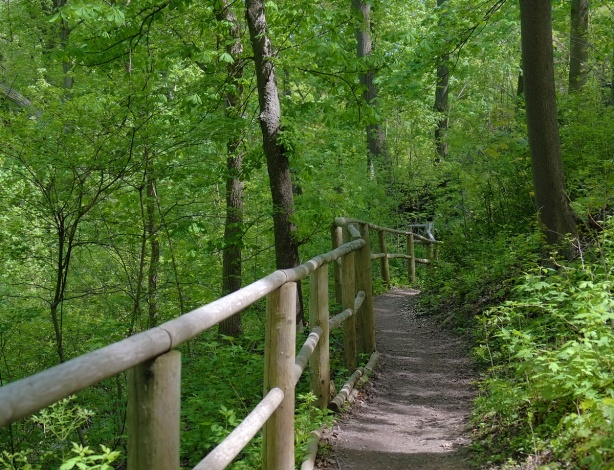 path through the woods with a wooden rail on the left side