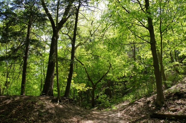 path through the woods, ots of trees of differing sizes