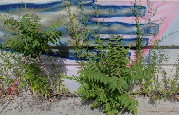 part of a mural, a blue hand horizontal on a wall with some weeds growing in front of it