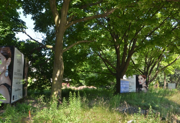 trees and overgrown yard, two large signs advertising townhouse developments to come