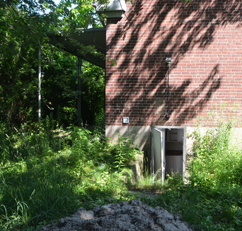 an open basement door on the side of a house, overgrown yard, pile of debris in the foreground
