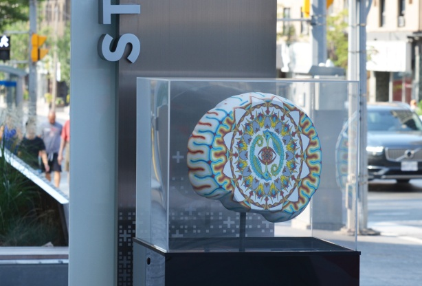 a brain from the brain project at yonge and St. Clair, in a plexiglass display case, minds eye by David Bagley
