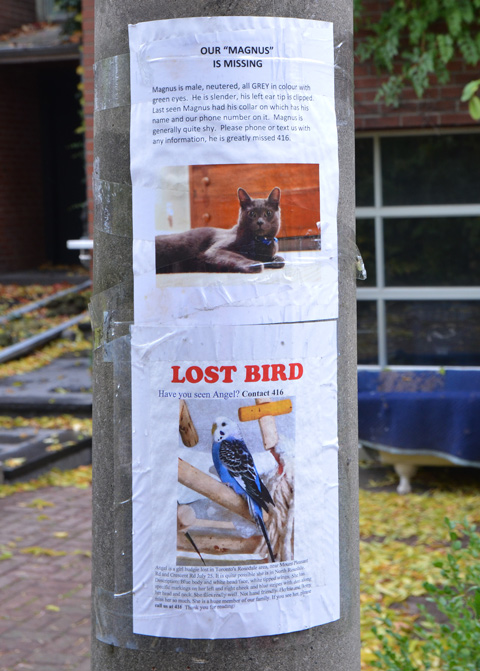two lost posters on a utility pole, one for Magnus the cat and the other for Angel the bird.