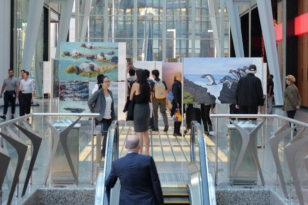 World press photo exhibit at Alan Lambert Galleria, a man comes up the escalator towards some of the photos in the nature category and the people who are looking at them.