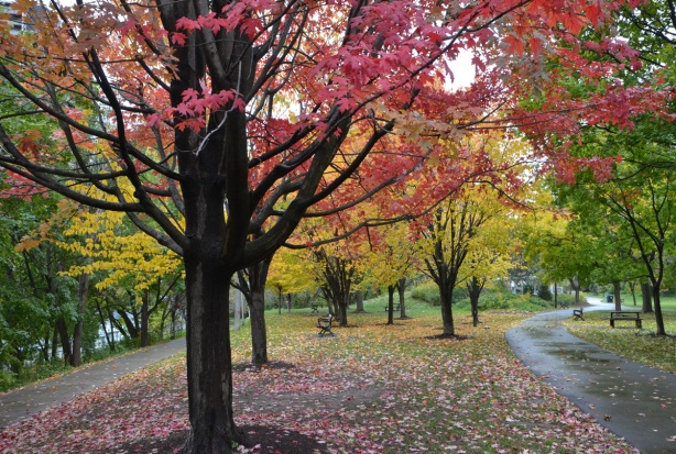 in a park, after the rain, autumn, red leaves and yellow leaves on the trees, many leaves on the ground