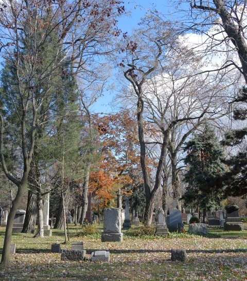 Necropolis cemetery, some tombstones, a pine tree, a tree with autumn leaves and some trees with no leaves, green grass