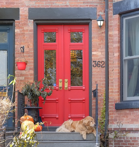 red double door, front door of house, porch with pumpkins on it, also a dog, a labrador retreiver, lying on the porch