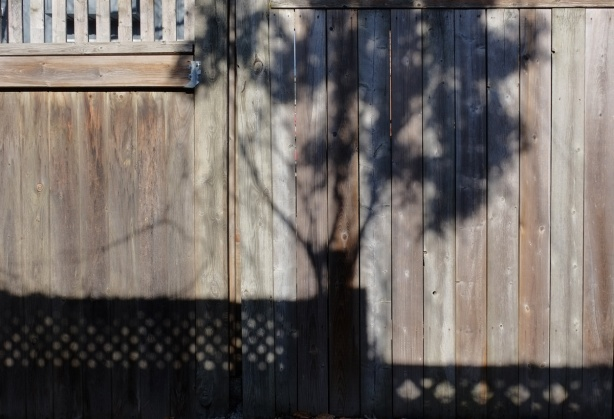 the shadow of a tree and all its leaves on a wood fence in an alley