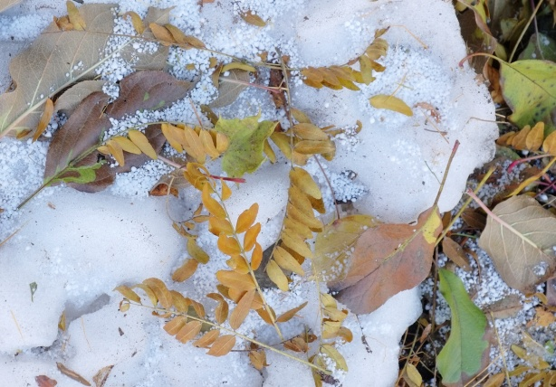 a small amount of snow and ice on the ground, some leaves that have fallen off trees and are on the ground.