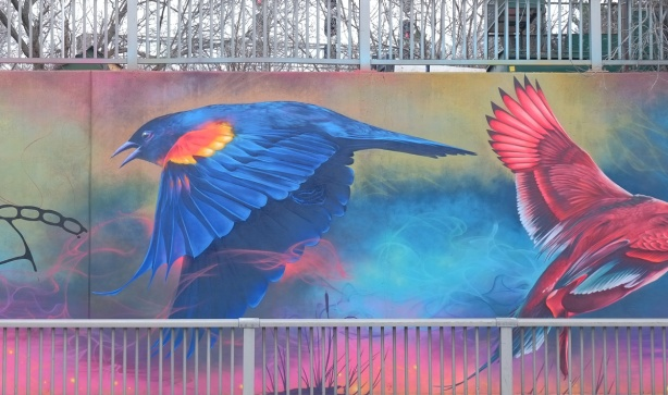 a red wing black bird in flight and the back part of a cardinal, part of a mural