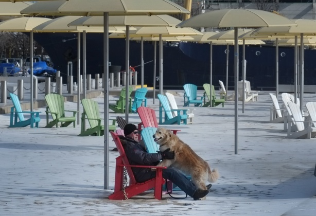 a man is sitting on a red muskoka chair, under a large plastic yellow umbrella on H 2 O beach in toronto, in the winter, some snow on the ground. A large golden lab dog has his forepaws on the man's lap
