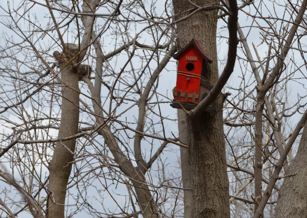 a bright red bird house in a tree, no leaves,
