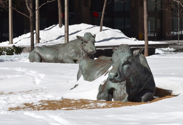 two sculptures of cows lying down, snow covered lawn,