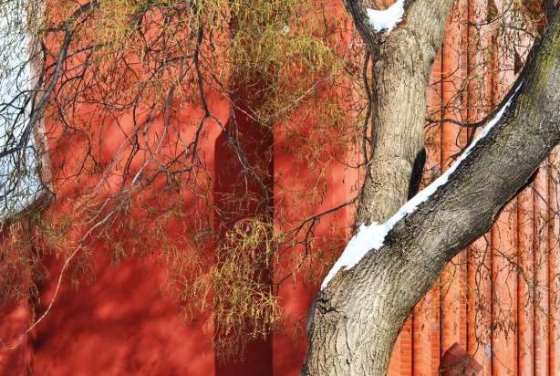 winter, snow on tree, dead leaves on tree, wispy leaves, in front of a rust coloured building