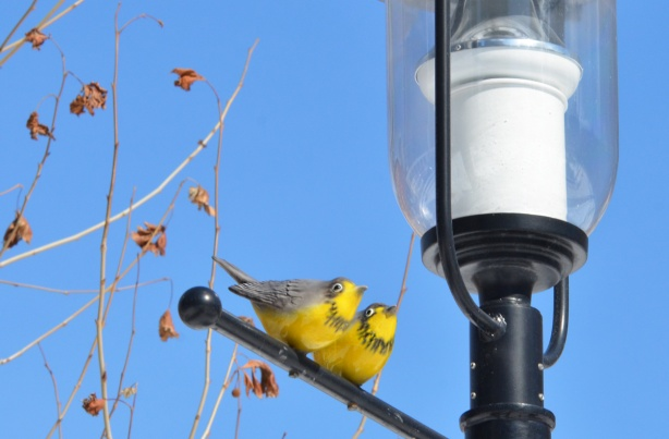 two yellow birds, not real, little sculptures, perched on the bar of a street lamp