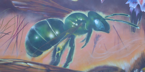 in a mural of bees, a small green bee, a sweat bee,
