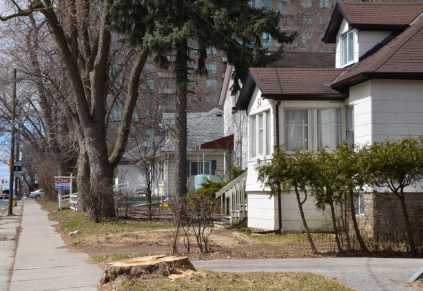 single family homes and large trees on Finch Ave