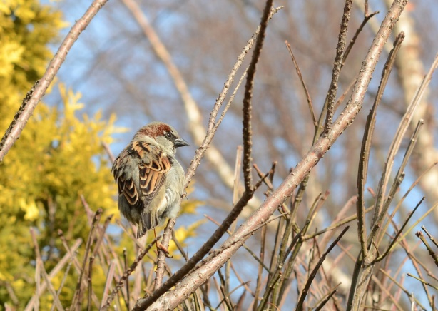 a little sparrow perched on a small branch of a shrub