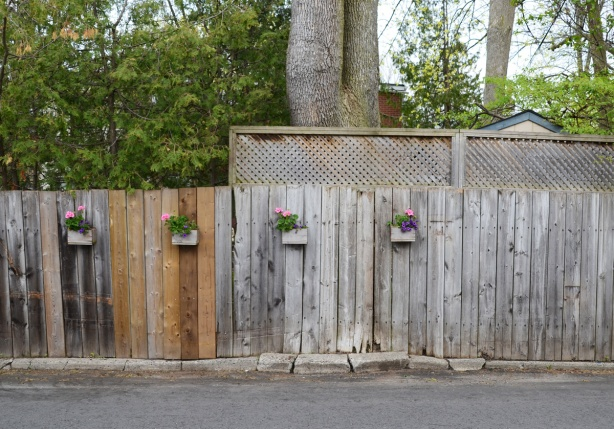 small wood flower boxes on a wood fence, with geraniums growing in the boxes