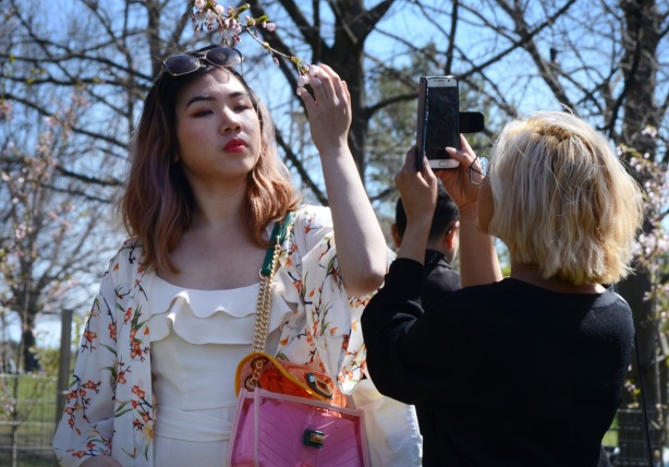 an Asian woman with a bright pink handbag holds a branch of a cherry tree in front of her face while another woman takes her picture with a phone.