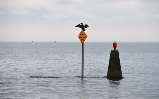 a large bird sits on a yellow sign out in the waters of Lake Ontario, an orange (or red) light sits on a concrete pedestal beside it