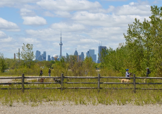 fence surrounding dog park, tall grasses, shrubs and trees in dog park, CN Tower and Toronto skyline in the distance, Woodbine Beach