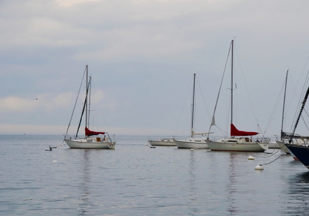 four white sailboats moored in the water, Lake Ontario, with their main sails wrapped up and put away, calm water but grey skies