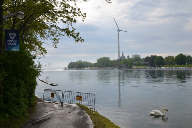 on the northwest corner of Ontario Place, gate across path because of flooding, a swan in the water, the wind turbine on the CNE grounds in the distance