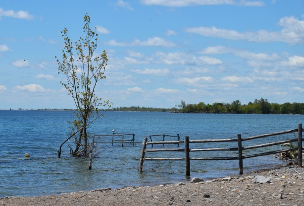 a tree in the water, part of a fence also in the water, Lake Ontario