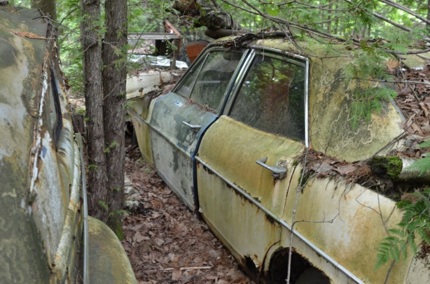 an old yellow car with blue drivers door, rusty and peeling paint, parked under a tree, no wheels, covered in old leaves and cegar branches