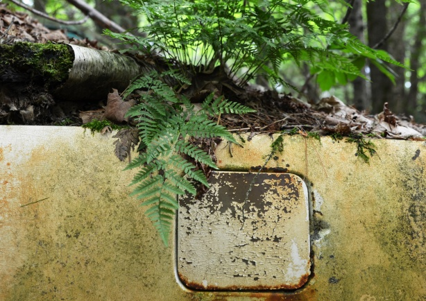 ferns growing on top of the trunk of an old yellow car, rusty car, side panel with gas tank flap shown